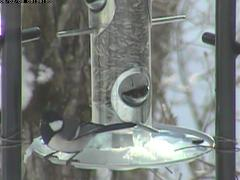 20060208_bird02