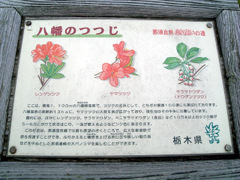 20060604yahata02
