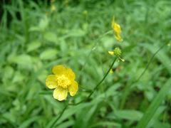 20060616flower01