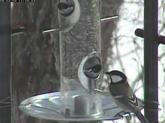 birdfeeder20060203-03