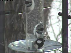 birdfeeder20060203-04