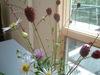 sanpo_flower