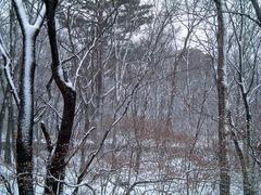snow_garden2